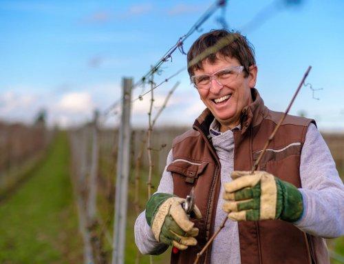 Ruhestand ist kein Stillstand – Martin Fox berichtet über seinen Bundesfreiwilligendienst im Weinbau